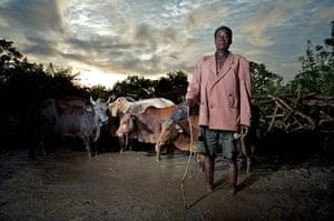 Katine farming: Wealthy farmer Esau Edonu with his cattle.  Esau is cattle-rich but cash po