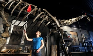 dinosaur skeleton for sale