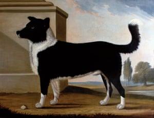 Byron: Lord Byron's dog Boatswain