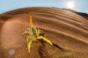 Sunlightgallery: Namib dessert