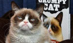 Grumpy cat, who was named Buzzfeed's employee of the month in November 2012.