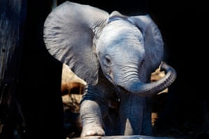 Picture Editor Awards: Baby Elephant