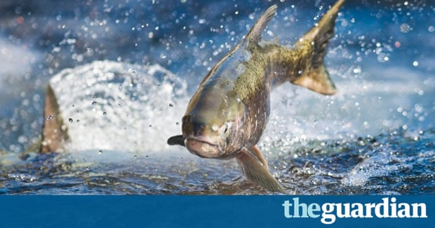 Best pictures of the day live news the guardian for Cannon fish company