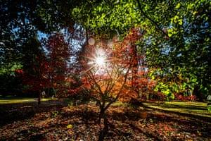 Autumn colours: Sun peers through tree branches