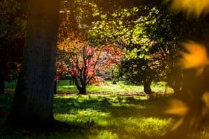 Autumn colours: Various tree species