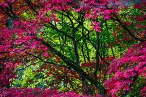 Autumn colours: Maple leaf border