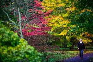 Autumn colours: Woman walks along path