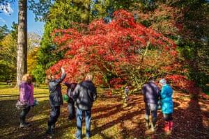 Autumn colours: People photograph a maple tree