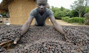 An agricultural worker prepares cocoa be