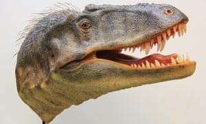 tyrannosaur head