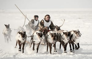 Nenets, Disappearing Lives