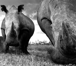 David Yarrow Encounter: Rhinos