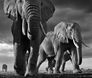 David Yarrow Encounter: Elephants