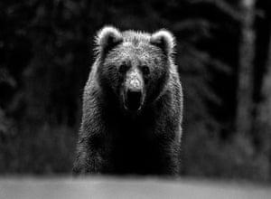 David Yarrow Encounter: Grizzly bear