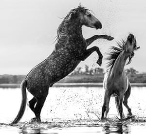 David Yarrow Encounter: Horses