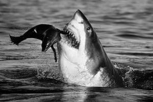 David Yarrow Encounter: Shark
