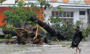 A man walks past a tree uprooted by strong winds brought by super Typhoon Haiyan that hit Cebu city, central Philippines.
