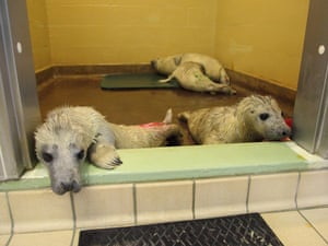 Each pup is expected to require up to five months' rehabilitation after being separated from its mother.