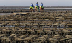 Horse mounted policemen patrol oyster cultures to protect them from thieves in G'fosse- Fontenay, France.