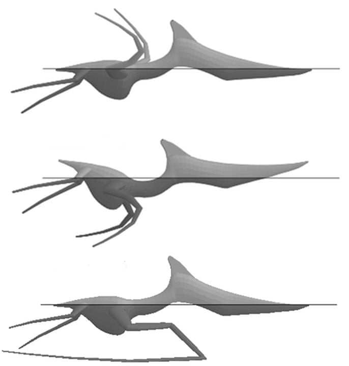 Life on the ocean wave wasn\'t easy for pterosaurs   Science   The ...