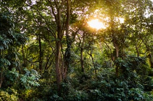 WWF Virunga Campaign: Jungle setting for Mikeno Lodge, an upscale lodge