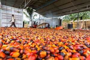 WWF Virunga Campaign: New soap factory that uses palm oil