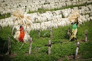Kenya at 50: Kenyan agriculture