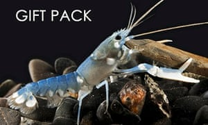 Adopt a lobster giftpack