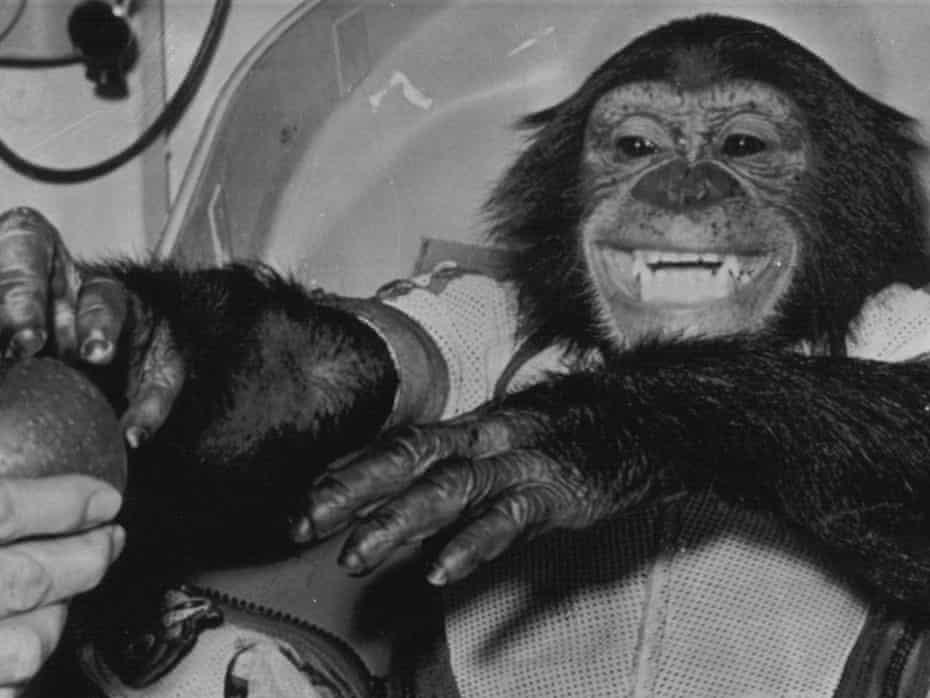 Ham the chimp following his space flight