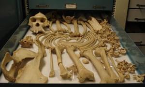 Ham's bones