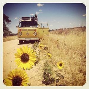 VW camper vans: VW camper in field with sunflowers