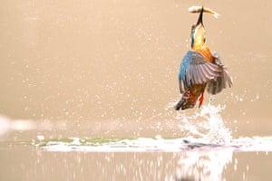 TPOTY: Kingfisher, Worcestershire, UK