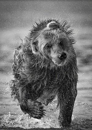 TPOTY: Bear, Kurile Lake, Kamchatka, Russia