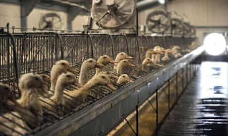 Foie gras off the menu? Animal rights activists want Christmas boycott