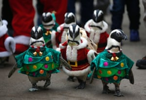 The penguins are getting in a festive mood in South Korea. Visitors look at penguins wearing Santa Claus and Christmas tree costumes at an amusement park in Yongin, south of Seoul.
