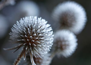 Frost is seen on plants during the early cold morning hours in Eichenau, Germany.