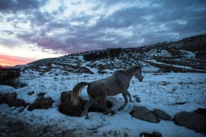 A horse walks in the snow at the base of Mount Hermon in the Golan Heights.