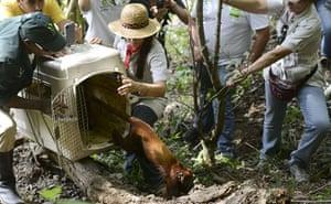 Week in wildlife: red howler monkey