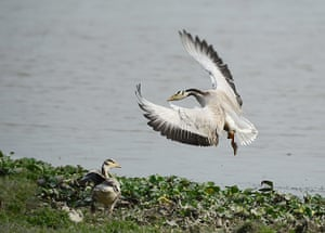 Week in wildlife: Birds in Kaziranga National Park, Assam, India