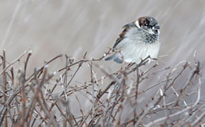 Week in wildlife: A bird rests on a bush during a snowstorm in Quebec City
