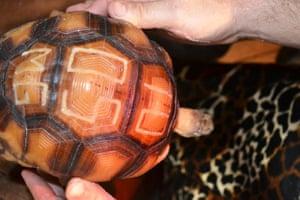 Week in wildlife: tattoo the tortoise