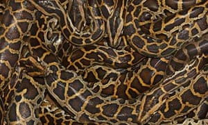 Snakes | Page 8 of 12 | Environment | The Guardian