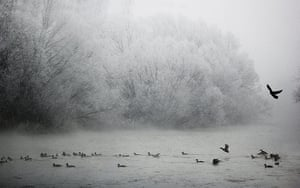 Week in Wildlife: Freezing temperatures hit Kosovo