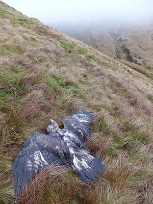 Week in Wildlife: golden eagle found dead