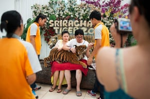 Chinese tourists: A young couple wait for a tiger cub to settle for a picture