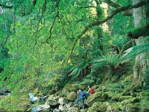Tasmanian forest