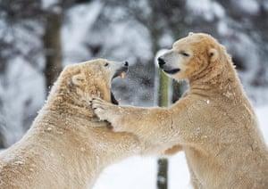 Top10: Polar bears in a Scottish zoo
