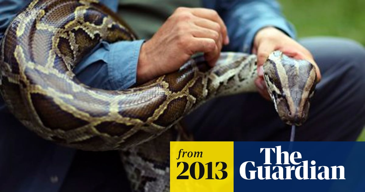 Python kills Bali security guard outside five-star hotel | World