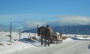 Romanian pony