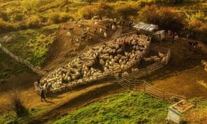 sheepfold Romania